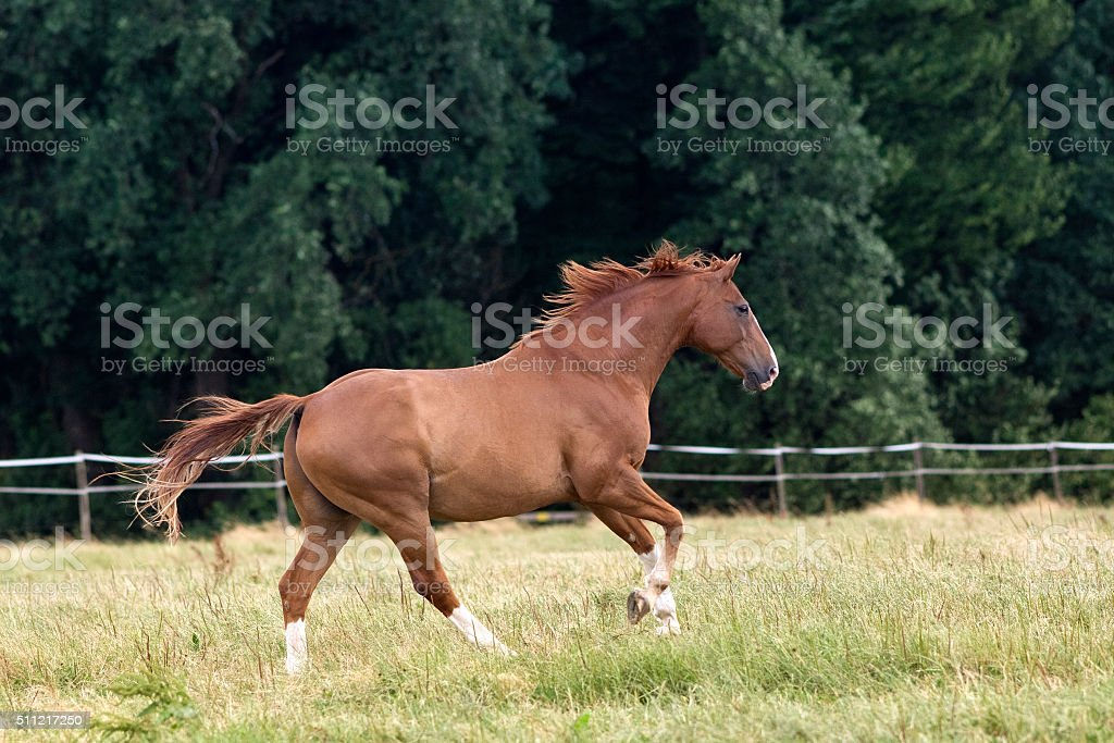 Horse gallop free on paddock stock photo