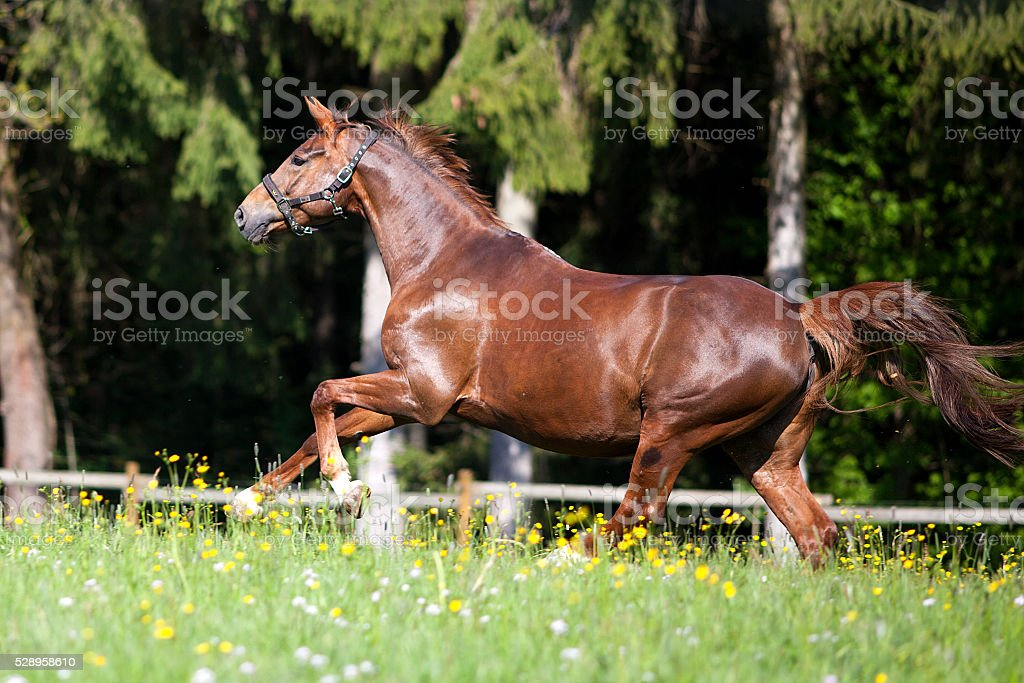Horse gallop free outside on meadow stock photo