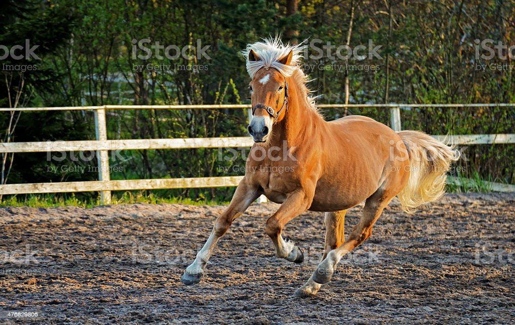 Horse gallop stock photo