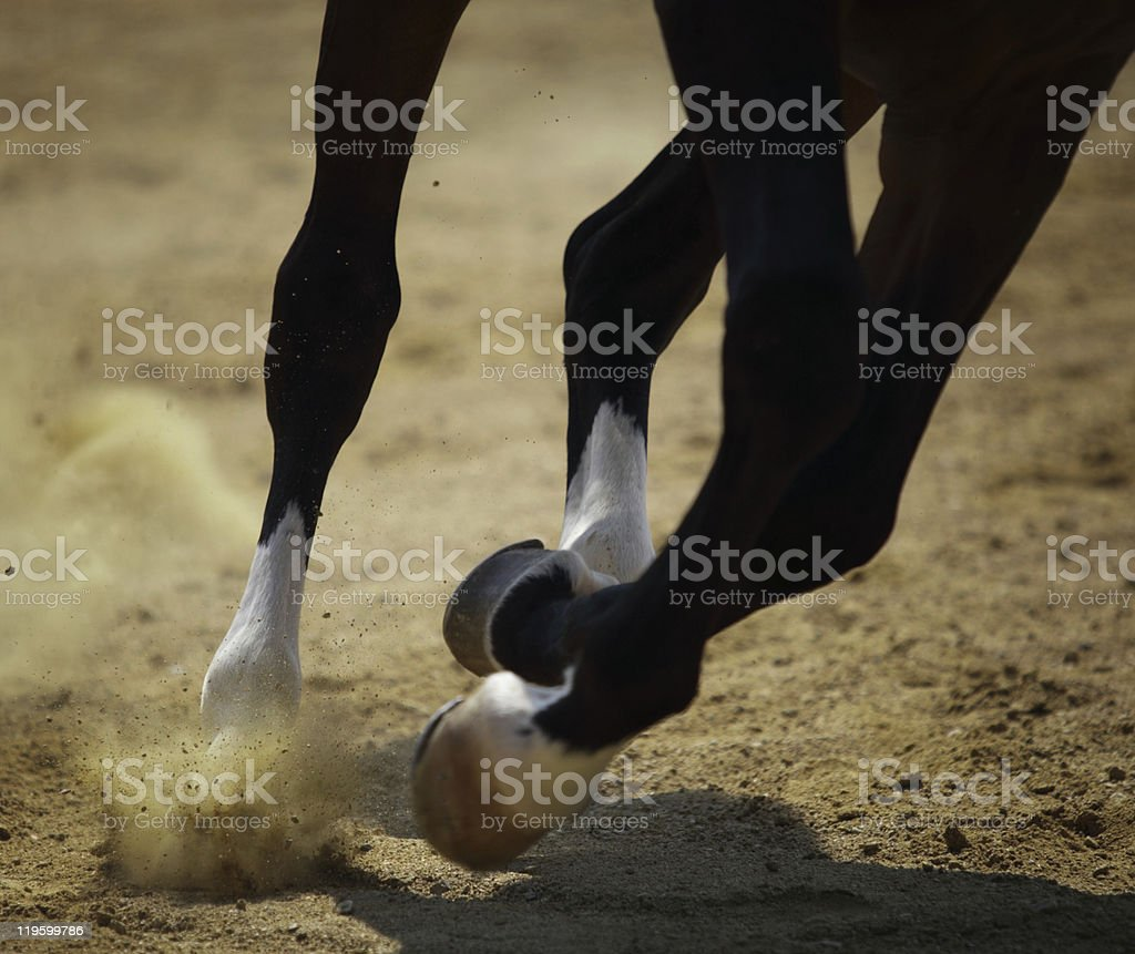 Horse galloping on the sand stock photo