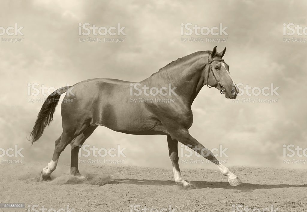 Horse galloping royalty-free stock photo