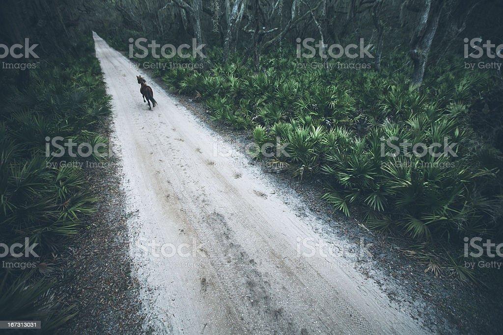 Horse gallops along rural coastal sand road at sunset stock photo