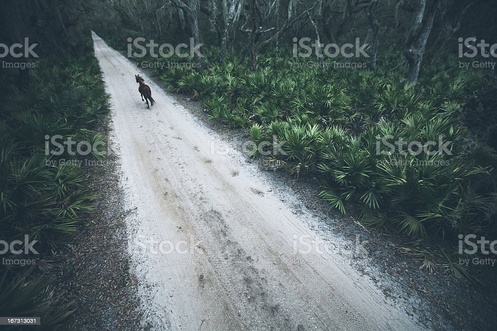 Horse gallops along rural coastal sand road at sunset stock photo