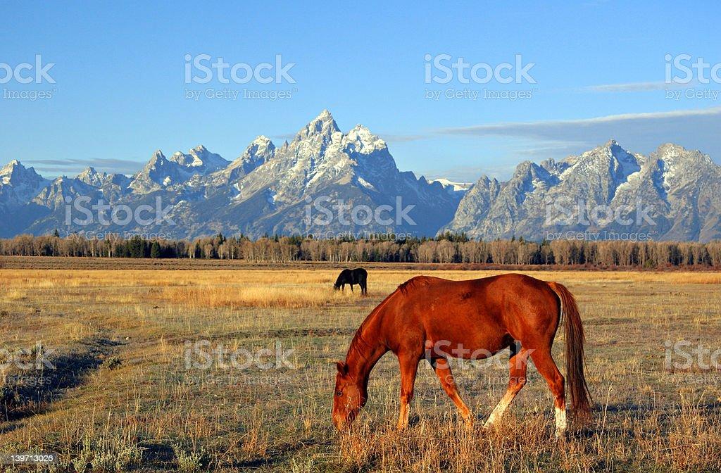 Horse & Grand Tetons royalty-free stock photo