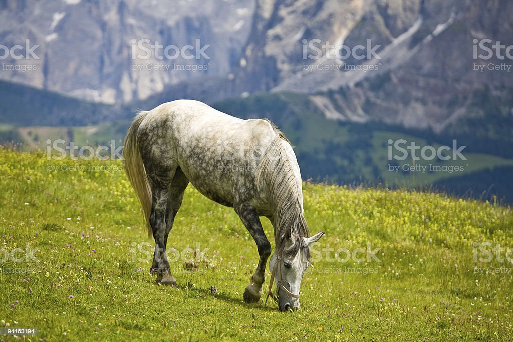 Horse grazed in mountains stock photo