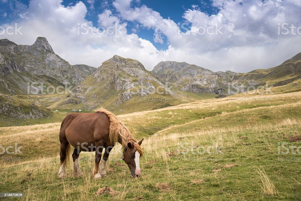 Horse grazing in the Pyrenees, France stock photo