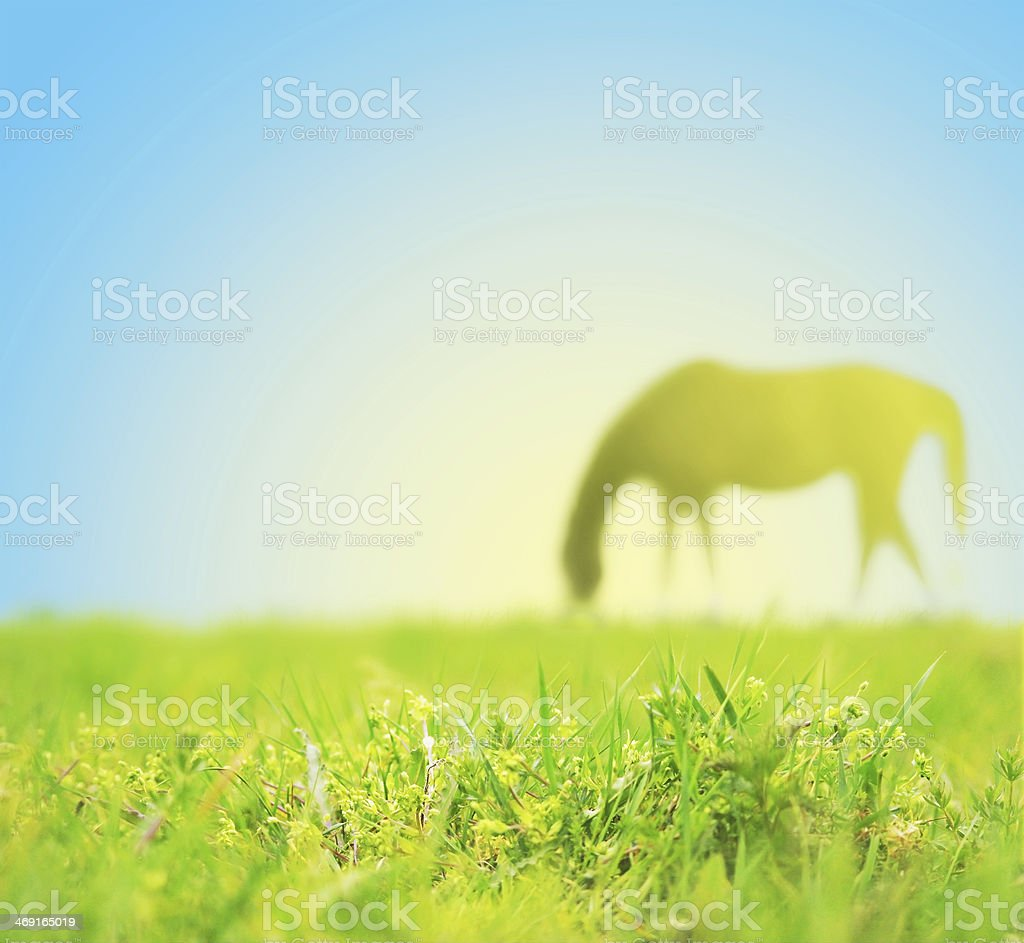 Horse grazing on spring pasture royalty-free stock photo