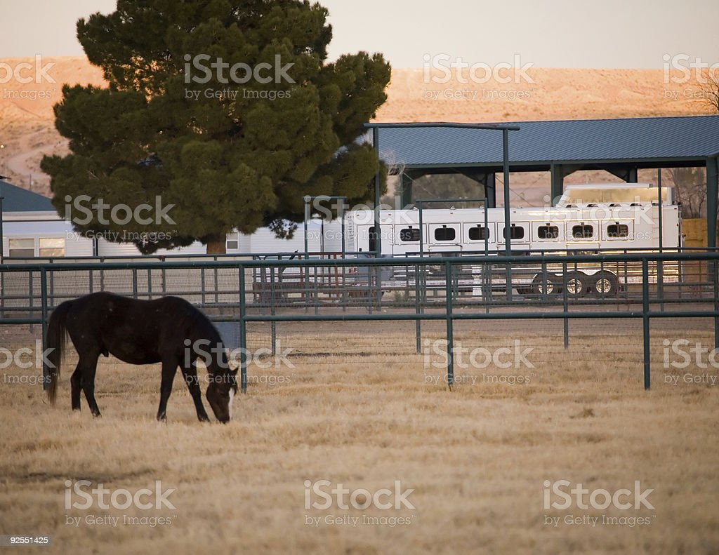 Cavallo al pascolo foto stock royalty-free