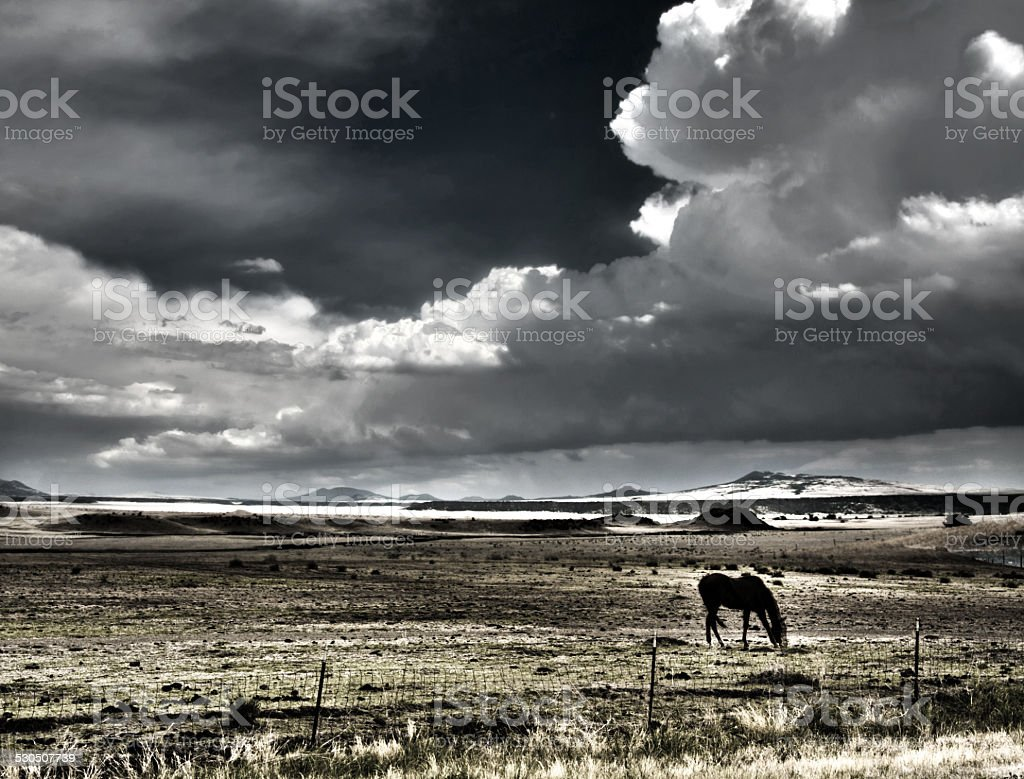 Horse grazing with thunderheads stock photo