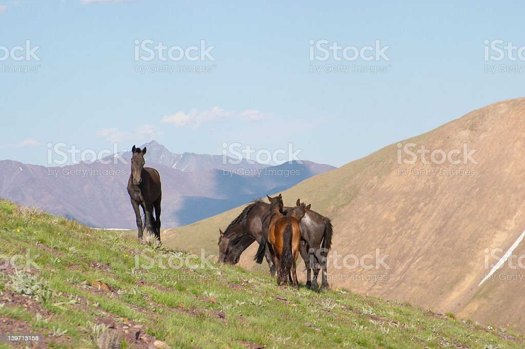 Horse group royalty-free stock photo