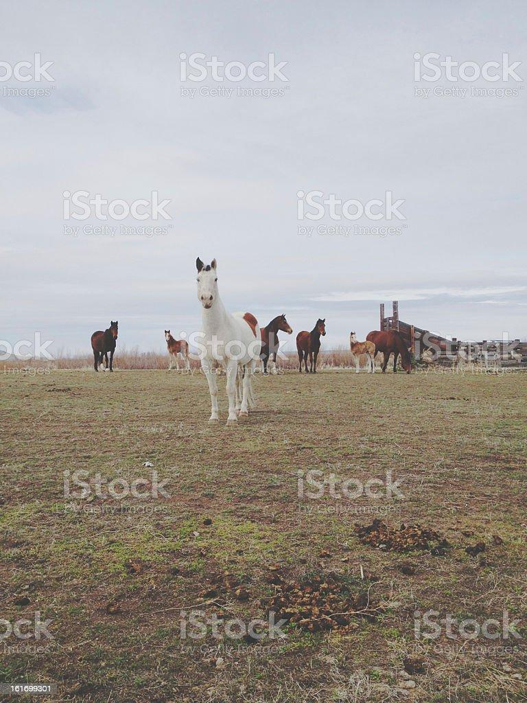 Horse Group stock photo