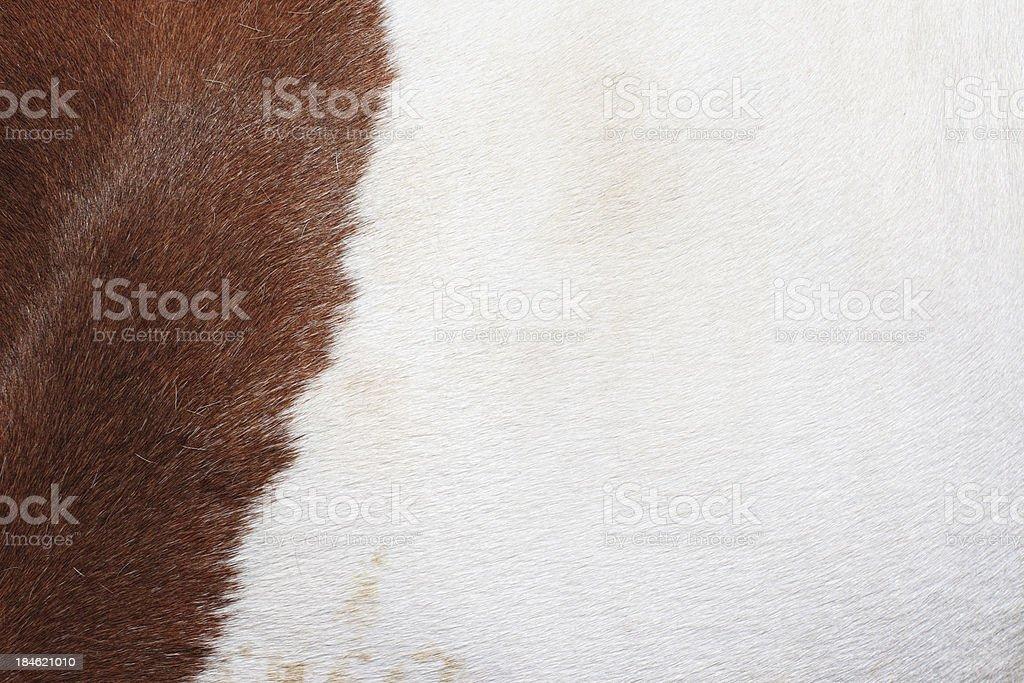 Horse Hair background stock photo