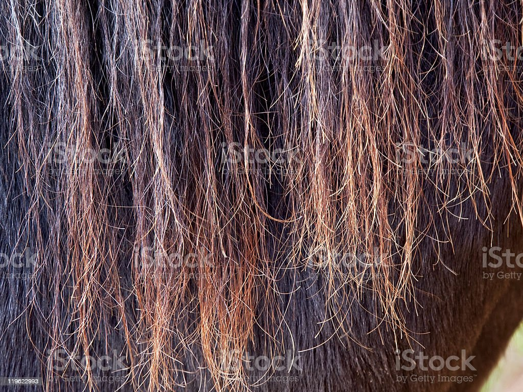 Horse Hair Texture stock photo