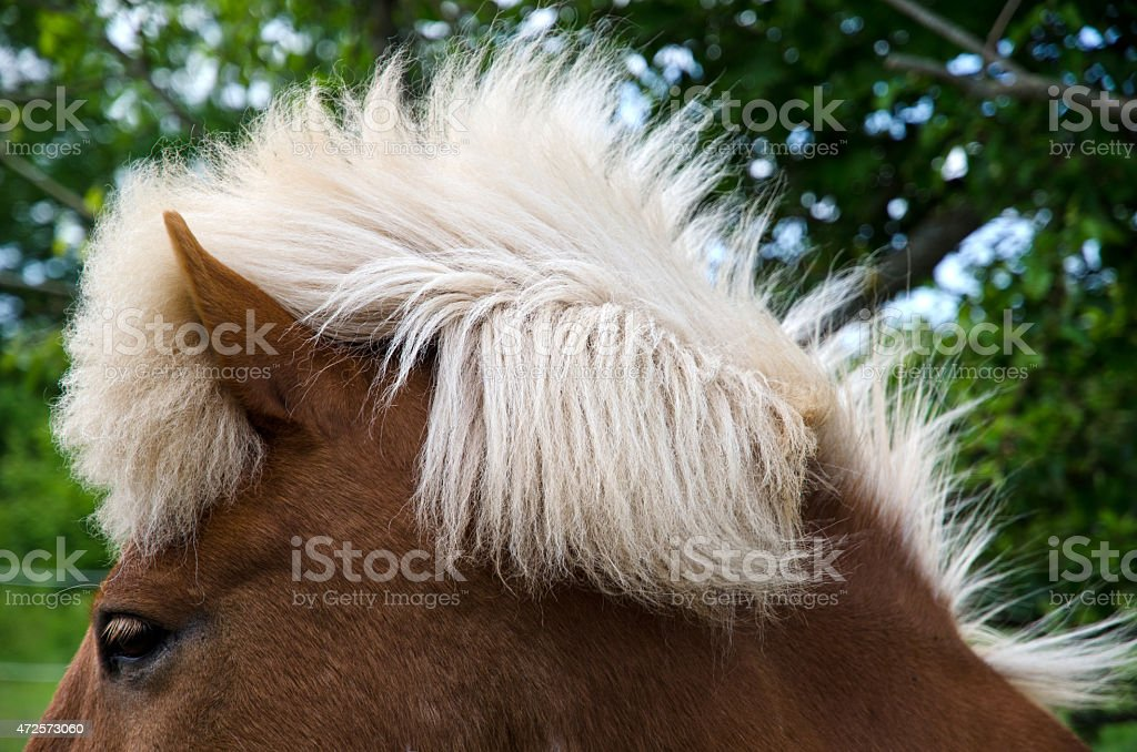 Horse hairstyle stock photo