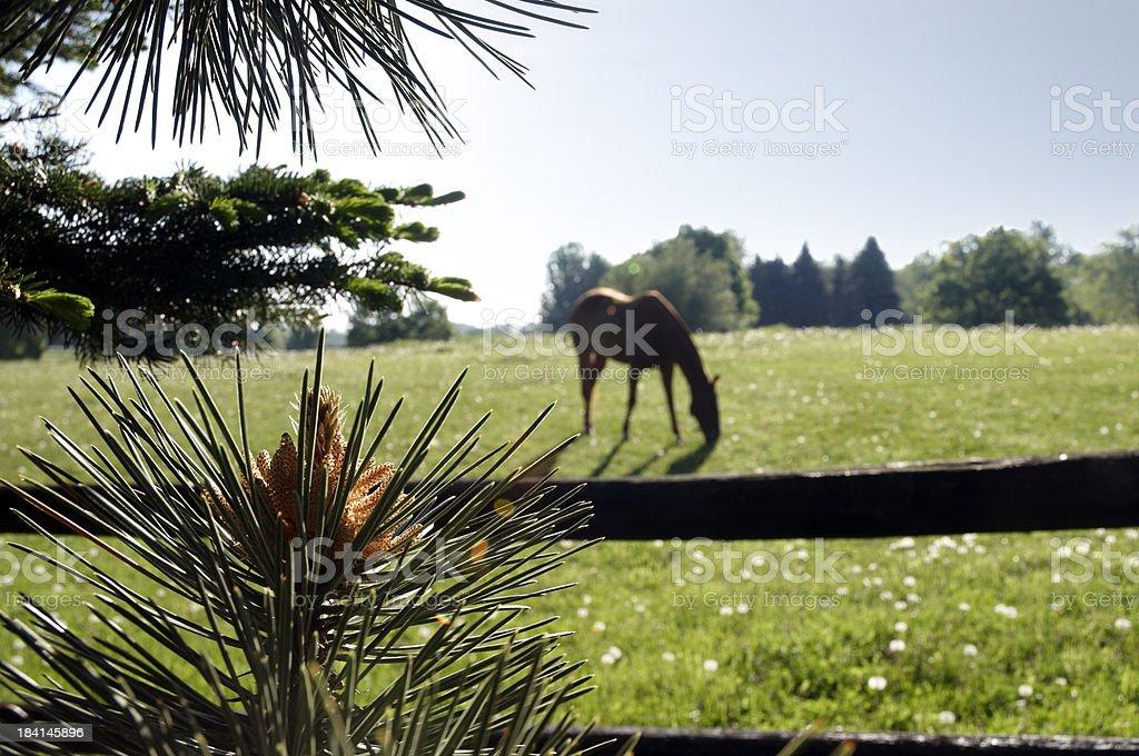 Horse having breakfast royalty-free stock photo