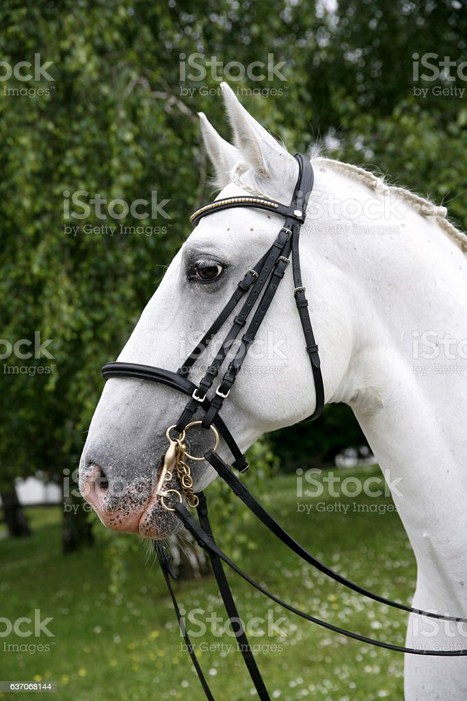 Horse head closeup on green natural background stock photo
