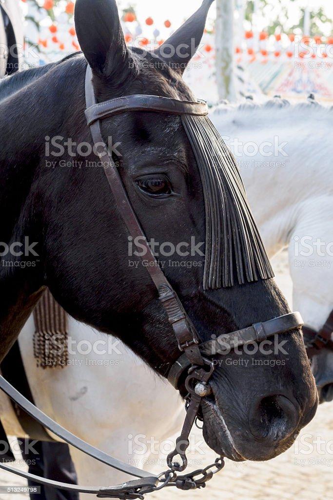Horse head closeup on the Fair of Seville stock photo