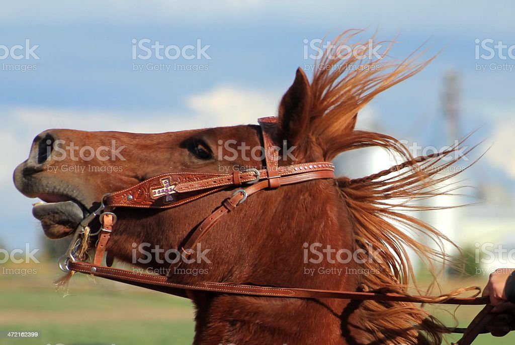 Horse head in wind stock photo