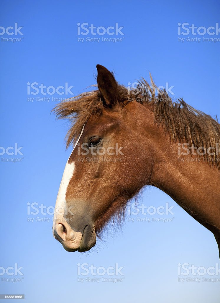 horse head stock photo