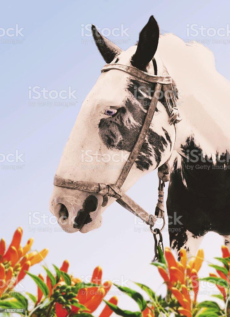 Horse head royalty-free stock photo