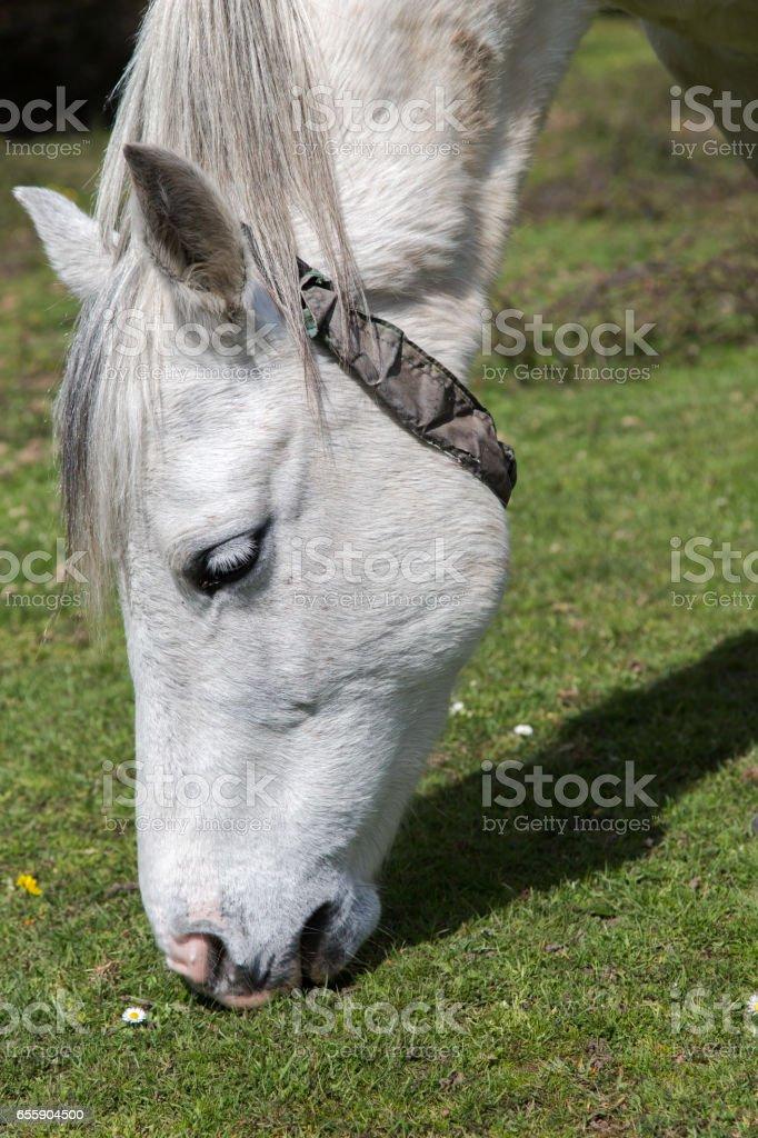 Horse head portrait stock photo