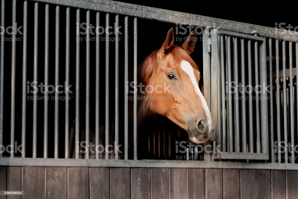 Horse Head Side-View Stable Bars Window Looking Brown White stock photo
