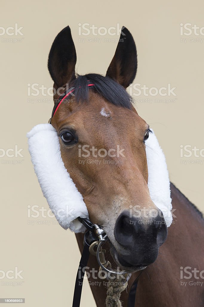 Horse head with Side Winkers royalty-free stock photo