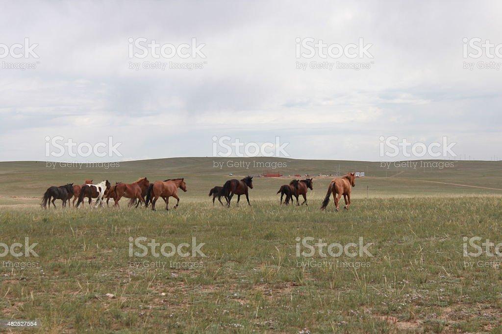 Horse herd in Hohhot grassland, Inner Mongolia, China stock photo