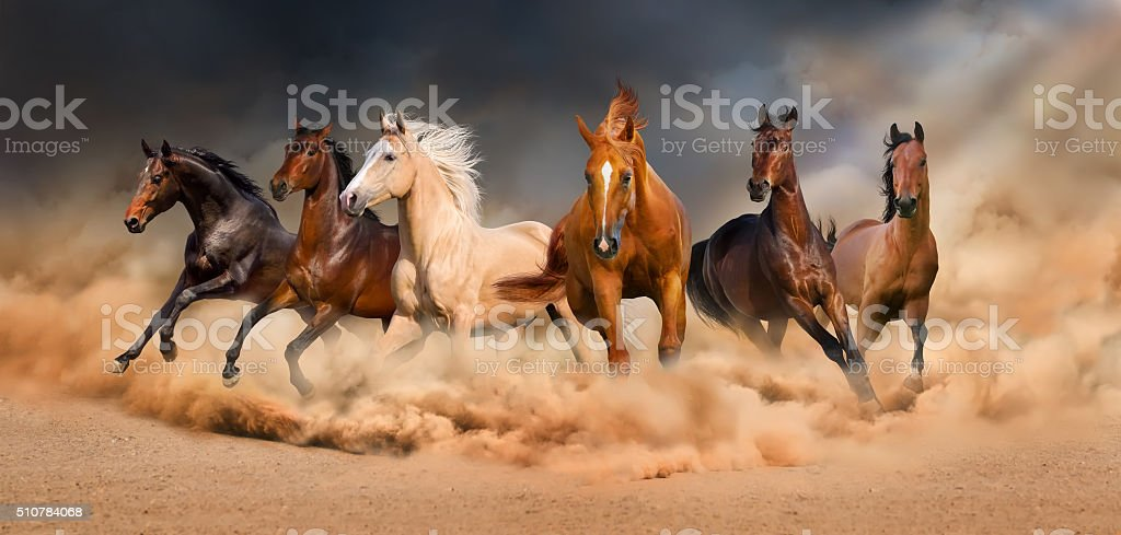 Horse herd stock photo