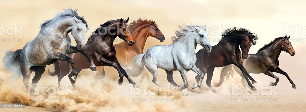 Horse herd run in clouds of dust stock photo
