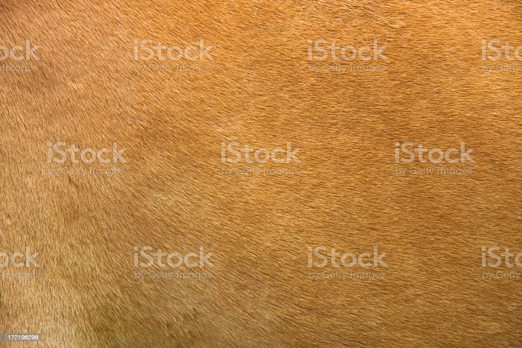 Horse hide detail stock photo