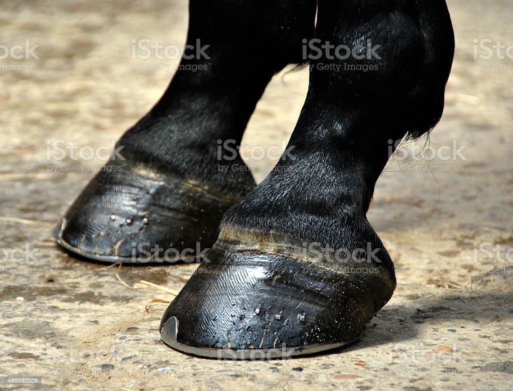 Horse Hoof - Hooves stock photo