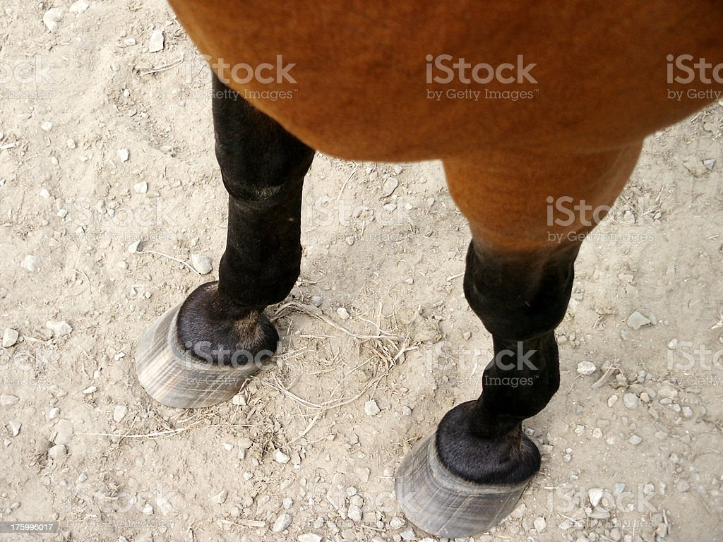 Horse Hooves and Legs royalty-free stock photo