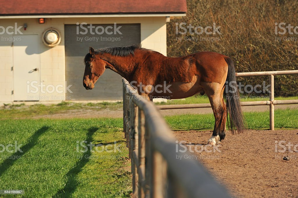 Horse in a corral with dirt ground stock photo
