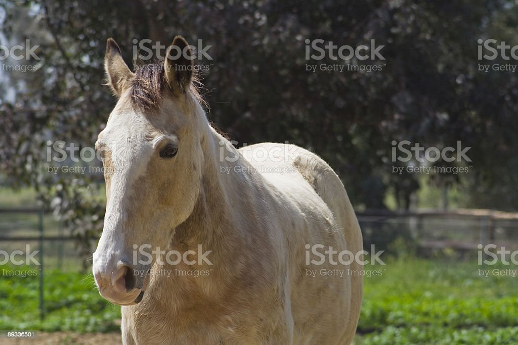 Horse in a field royalty-free stock photo