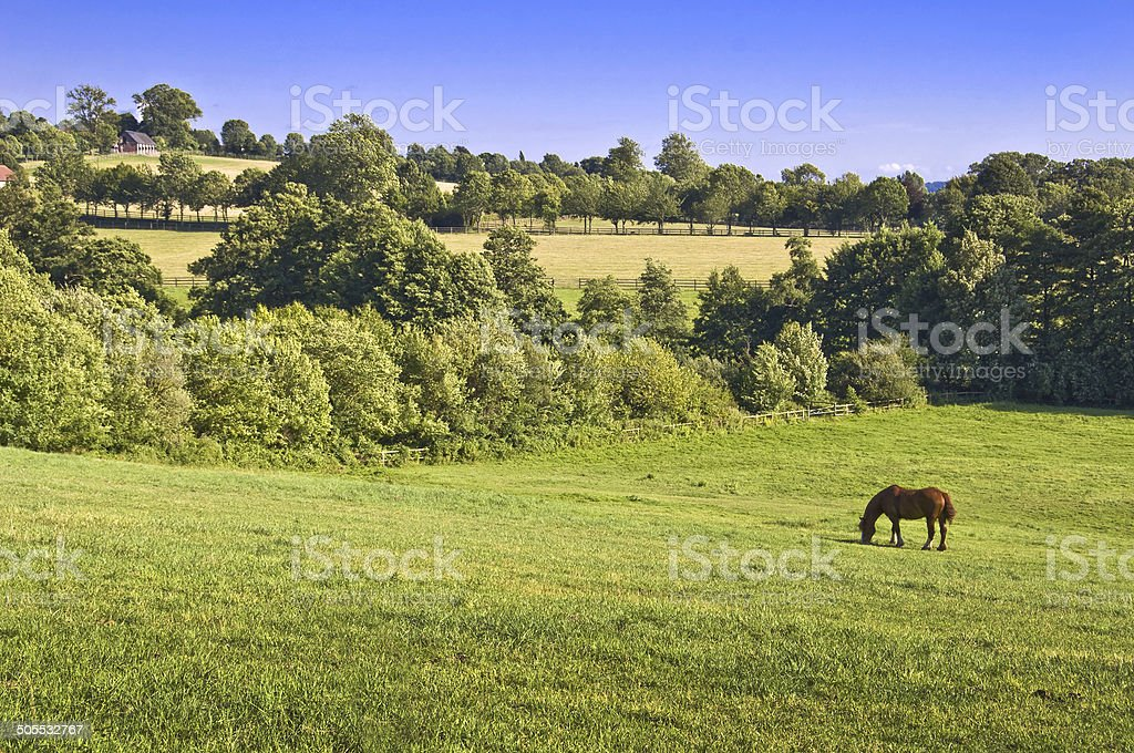 Horse in a meadow, Normandy, France royalty-free stock photo