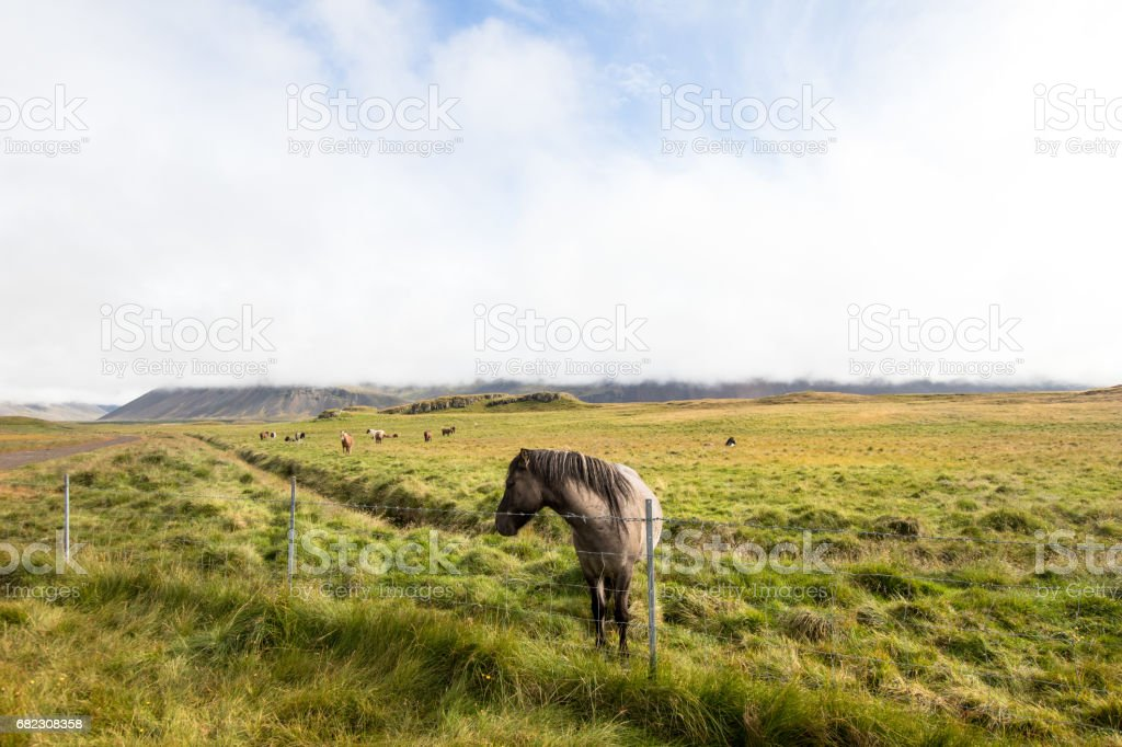 Horse in a mountain field stock photo
