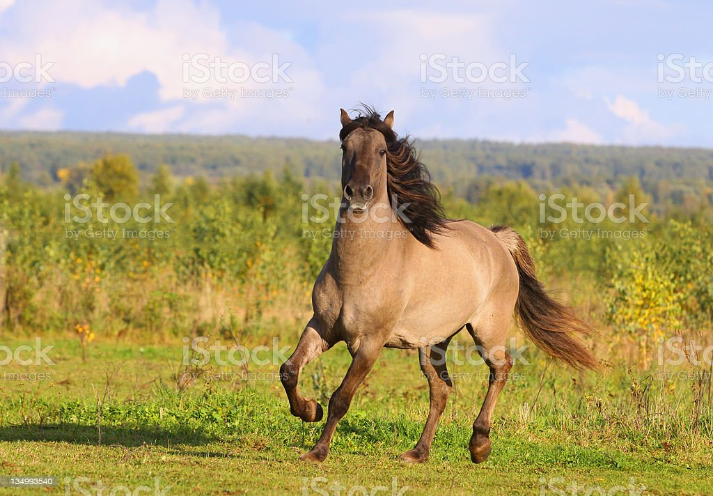 horse in autumn stock photo