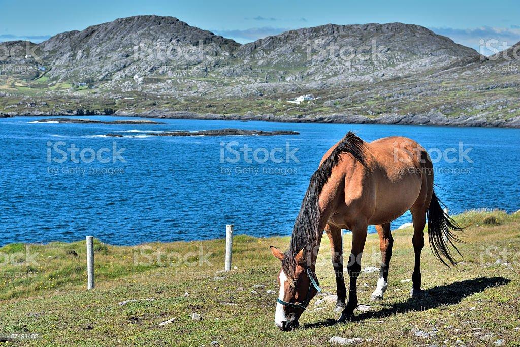 Horse in Beara stock photo