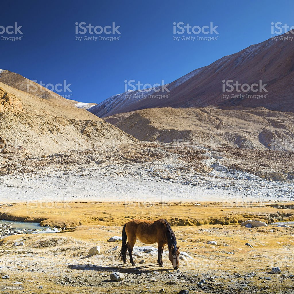 Horse in beautiful landscape Norther part of India royalty-free stock photo