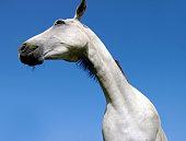 Horse in close up