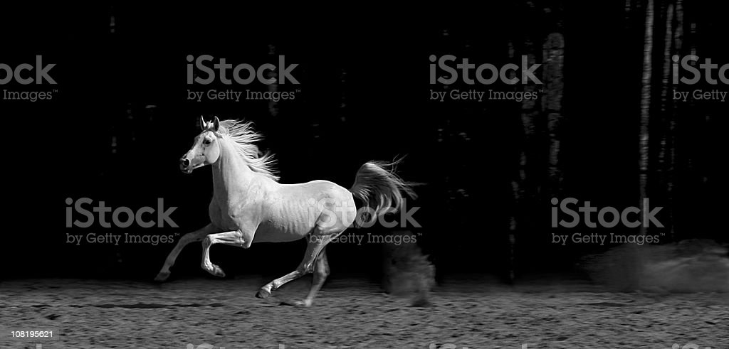 Horse in Corral, Black and White stock photo