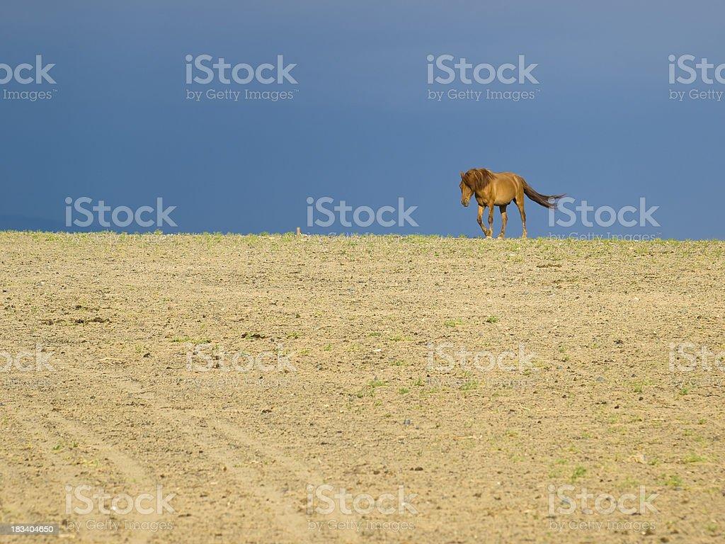 horse in desert royalty-free stock photo
