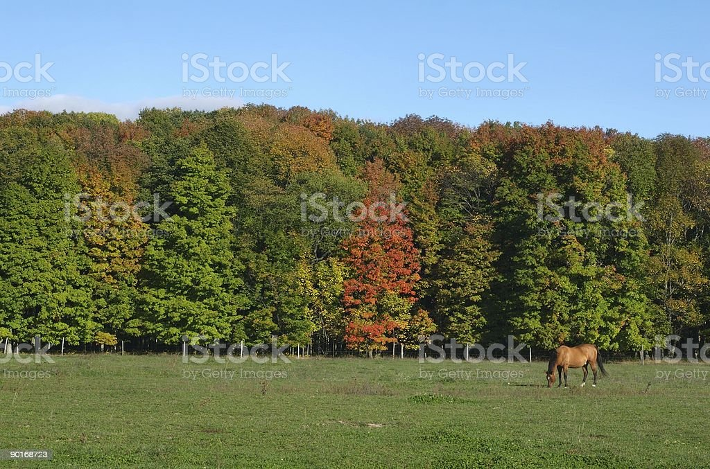 Horse in Fall royalty-free stock photo