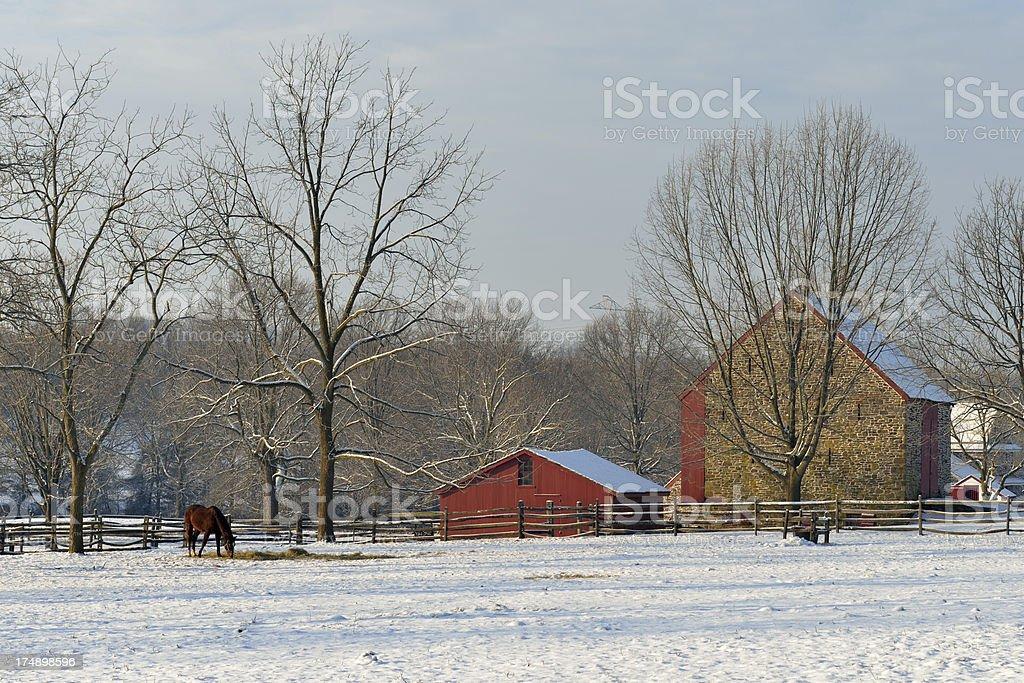 Horse in Farm royalty-free stock photo