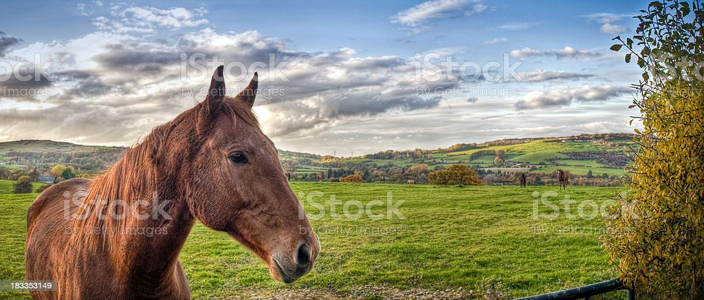 Horse in field, HDR, Cotswolds, Gloucestershire royalty-free stock photo