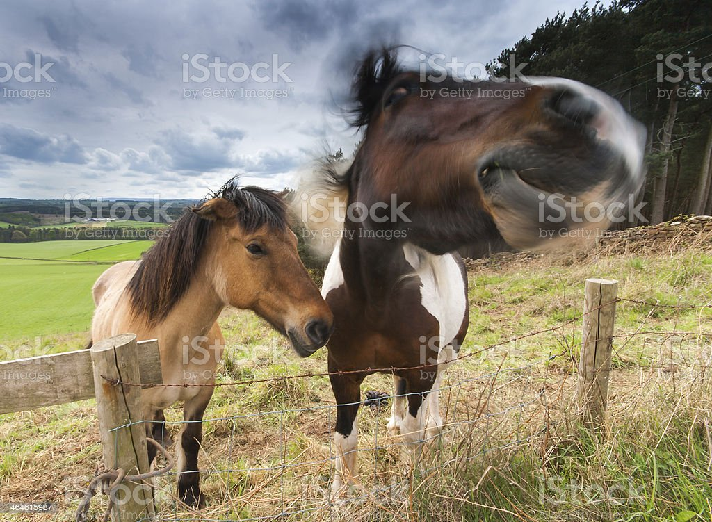 Horse In Field Shaking Off Fly. stock photo