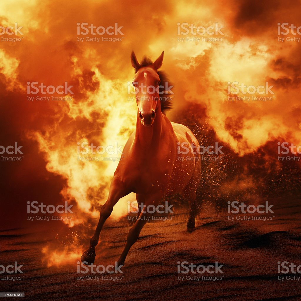 Horse in fire stock photo