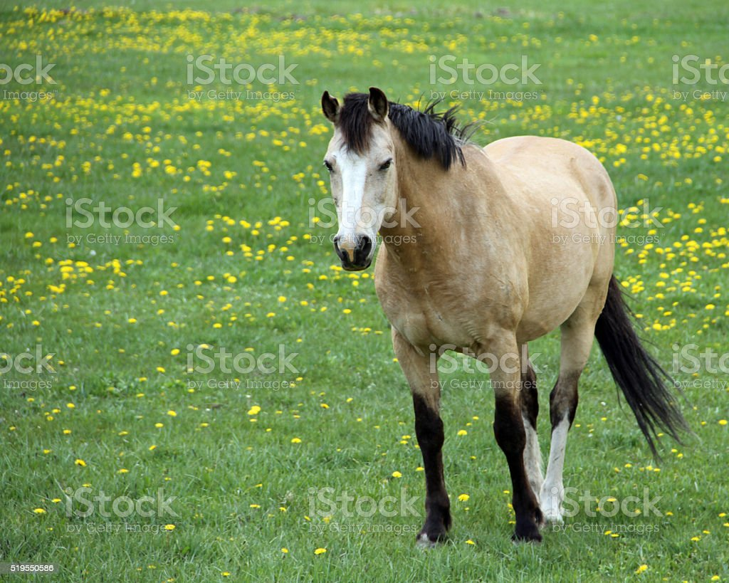 Horse in Flowers stock photo
