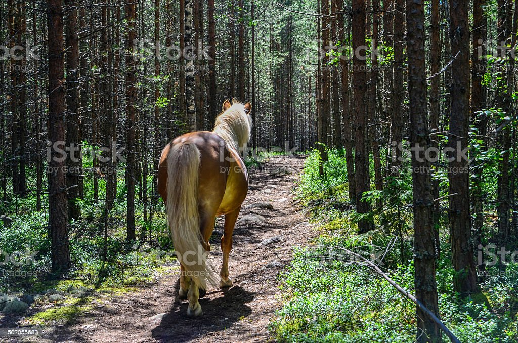 Horse in forest stock photo